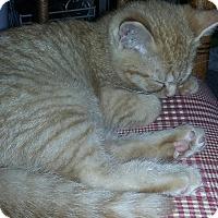 Adopt A Pet :: Scooter - Bay City, MI