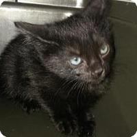 Adopt A Pet :: Willie (Petsmart Deer Valley) - Scottsdale, AZ