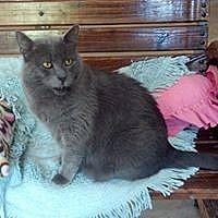 Adopt A Pet :: Berkley - Calimesa, CA