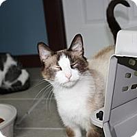 Adopt A Pet :: Suki - Armuchee, GA