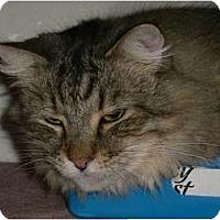 Adopt A Pet :: Beau - Brea, CA