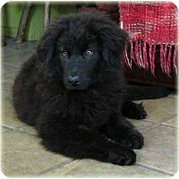 Adopt A Pet :: JoJo - Rigaud, QC