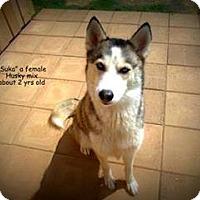 Adopt A Pet :: Suka - Gadsden, AL