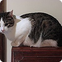 Adopt A Pet :: Otis - Columbia, MD