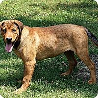 Adopt A Pet :: Marley - Staunton, VA