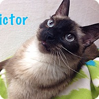 Adopt A Pet :: Victor - Foothill Ranch, CA