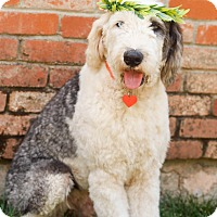 Dog Rescue Loomis Ca