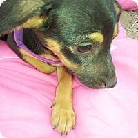 Adopt A Pet :: Renee - El Cajon, CA