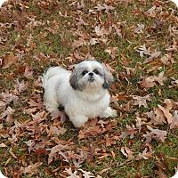 Adopt A Pet :: Cricket - West Deptford, NJ