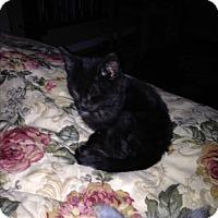 Adopt A Pet :: small fry - millville, NJ