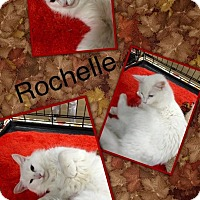Adopt A Pet :: Rochelle Loving Deaf Kitty - McDonough, GA
