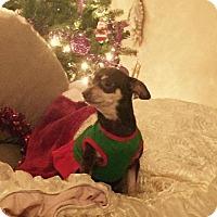 Adopt A Pet :: Annie - Windermere, FL