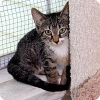 Adopt A Pet :: Tess - Dalton, GA