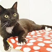 Adopt A Pet :: *SYDNEY - Sacramento, CA