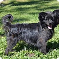 Adopt A Pet :: Sake - Mountain Center, CA