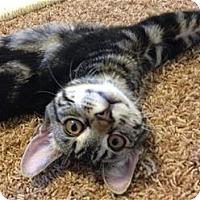 Adopt A Pet :: Maui - Rocklin, CA
