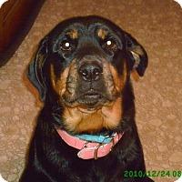 Rottweiler Dog for adoption in Dillsburg, Pennsylvania - Roxie