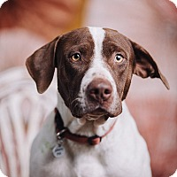 Adopt A Pet :: Rawley - Portland, OR