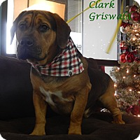 Adopt A Pet :: Clark Griswald - Bucyrus, OH