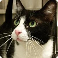 Adopt A Pet :: C.B. - Sarasota, FL