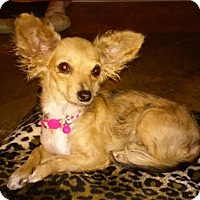 Adopt A Pet :: Bambi (A) - Santa Ana, CA