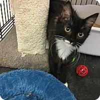 Adopt A Pet :: Melody - Alpharetta, GA
