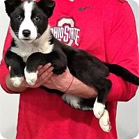 Adopt A Pet :: Faith - New Philadelphia, OH