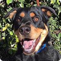 Adopt A Pet :: Dyson - Campbell, CA