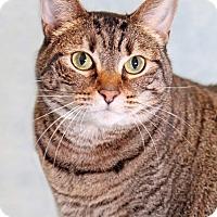 Adopt A Pet :: Gracie - Encinitas, CA