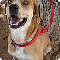 Adopt A Pet :: Rio - Apple Valley, CA