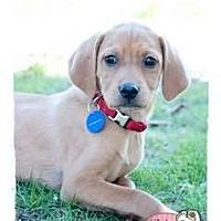 Adopt A Pet :: Nate - Haverhill, MA