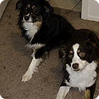 Adopt A Pet :: Maggie - Mesquite, TX