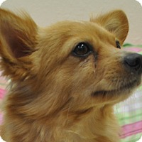 Adopt A Pet :: Buddy - Tumwater, WA