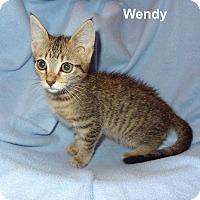 Adopt A Pet :: Wendy - Bentonville, AR