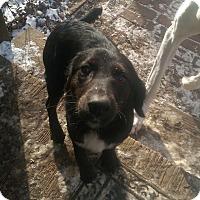 Adopt A Pet :: Maya - Charlestown, RI