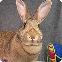 Adopt A Pet :: Felicity - Newport, DE