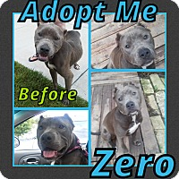 Adopt A Pet :: Zero - Cheney, KS