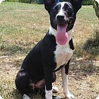 Adopt A Pet :: Angie - Bardonia, NY