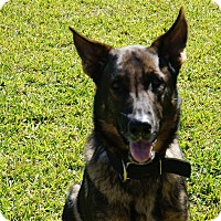Adopt A Pet :: Arrow - Pompano Beach, FL