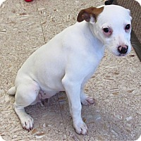 Adopt A Pet :: Charleigh - North Olmsted, OH