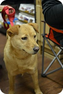 Chow Chow/Golden Retriever Mix Dog for adoption in Tunica, Mississippi - Nellie SOFT AND SNUGGLY