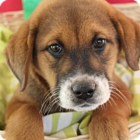 Adopt A Pet :: Fluffy - Waldorf, MD