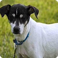 Adopt A Pet :: MAGGIE - West Palm Beach, FL