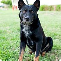 Adopt A Pet :: Tapa - San Diego, CA