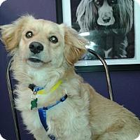 Adopt A Pet :: Dalton - Thousand Oaks, CA