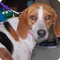 Adopt A Pet :: Dracie - Brooklyn, NY