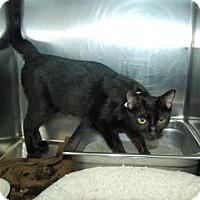 Adopt A Pet :: Carol - Bradenton, FL
