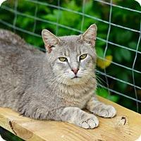 Adopt A Pet :: Zeus - San Antonio, TX