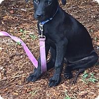 Adopt A Pet :: Blaze - available 7/2 - Sparta, NJ
