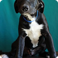 Adopt A Pet :: John - Waldorf, MD